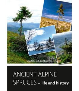 Ancient alpine spruces – life and history