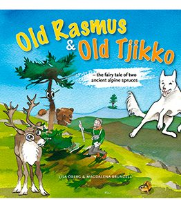 Old Rasmus & Old Tjikko – the fairy tale of two ancient alpine spruces